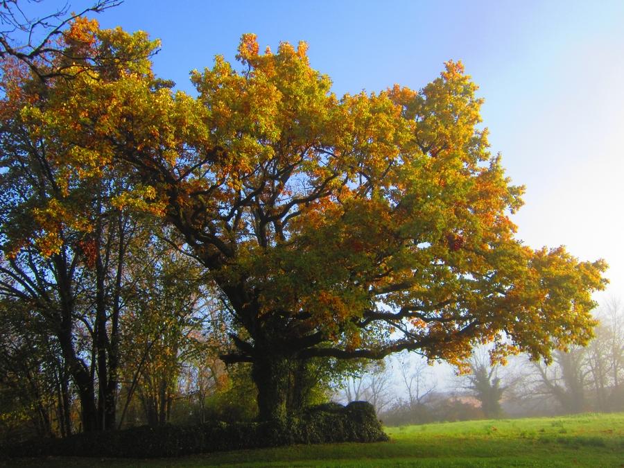 arbre fay