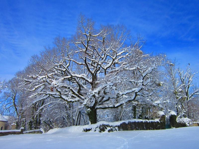 Arbre neige3
